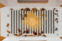 Lots of cockroaches have been catched by the sticker or catcher Royalty Free Stock Images