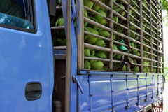 Lots of coconut in the truck Stock Photos