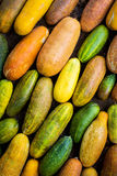 Lots of colorful cucumber Stock Images