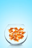 Lots of colorful goldfishes Royalty Free Stock Image