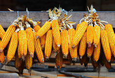 Lots of corn Stock Images