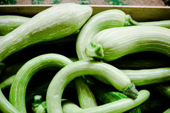 Lots of courgette. Some bended fresh green courgettes in a box Stock Photography