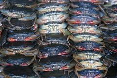 Lots of crabs for sale Stock Image