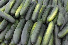 Lots of Cucumbers For Sale Royalty Free Stock Images