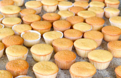 Lots of cupcakes ready to decorate Stock Photo
