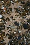 Stranded starfish on beach stock photos