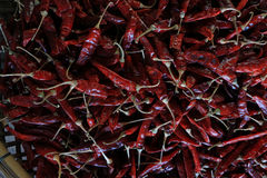 Lots of dried chilli. On threshing basket Stock Images