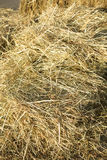 Lots of dry hay, photographed close up Stock Image