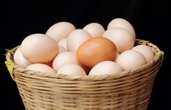 Lots of eggs Royalty Free Stock Photo