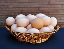 Lots of eggs Stock Image
