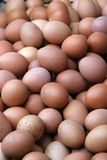 Lots of eggs. Stock Photo