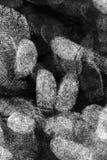 Lots of finger prints. Close up image finger prints on paper stock photo