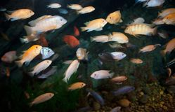 Lots of fish Royalty Free Stock Photos