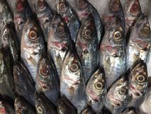 Lots of fish. A shot of fresh caught fish neatly arranged for sale at a local supermarket in Selangor Malaysia Royalty Free Stock Images
