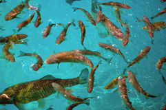 Lots of fishes Stock Photo