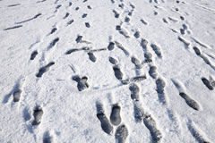 Lots of footprints in the snow. Royalty Free Stock Photos