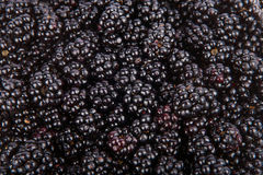 Lots of fresh bramble berries from the forest Royalty Free Stock Photo