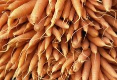 Lots of fresh carrots Stock Image