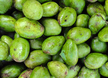 Lots of fresh green mango Stock Image