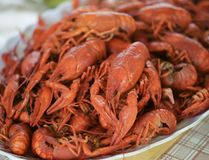 Lots of fresh hot crawfish, appetizer attache. Lots of fresh hot crawfish, appetizer attache royalty free stock image