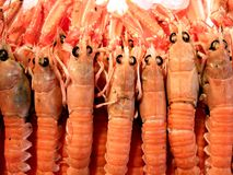 lots of fresh shrimps Stock Photography