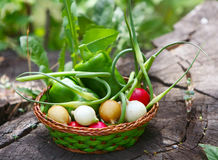 Lots of fresh vegetables in a wicker basket. Multicolored radishes. Green bell peppers. The stalk of garlic. Agricultural products. A vegetarian diet. Healthy Royalty Free Stock Photo