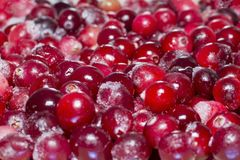 Lots of frozen cranberries. royalty free stock photo