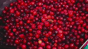 Lots of frozen cranberries are mixed with a scoop Slow motion