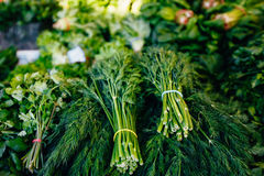 Lots of greenery on the counter Stock Image