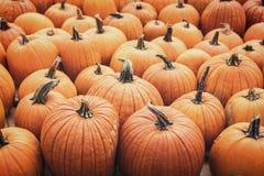 Lots of Halloween pumpkins, Jack o lantern background. Lots of Halloween pumpkins, orange Jack o lantern background stock photo