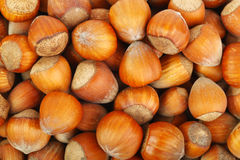 Lots of hazelnuts Royalty Free Stock Image