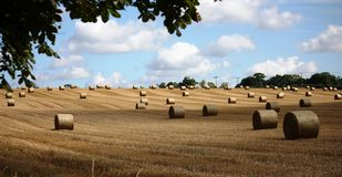 Lots of large round bales in rural farmland Royalty Free Stock Photography