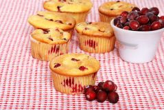 Lots Of Lemon Cranberry Muffins Stock Photos
