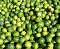 Lots of Limes Stock Images