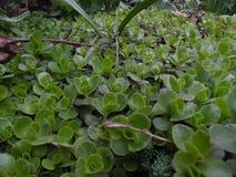 Lots of little green flowers