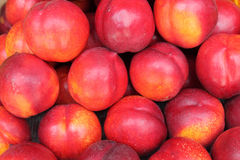 Lots of Nectarines Royalty Free Stock Photo