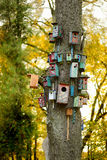 Lots of nesting boxes on a tree Royalty Free Stock Photography