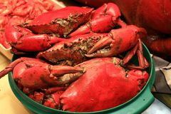 Lots Of Crabs Stock Images
