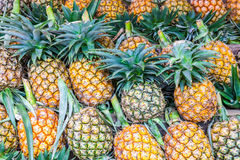 Lots off ananas Royalty Free Stock Photography