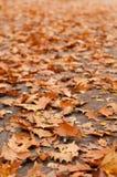 Lots of orange leaves Stock Photo