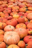 Lots of orange Pumpkins, Background for Halloween and Autumn Royalty Free Stock Images