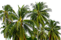 Lots of palm trees over white Royalty Free Stock Photos