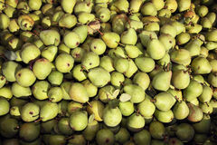 Lots of pears freshly harvested Royalty Free Stock Photography
