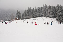 Lots of people having fun in snow. Lots of people having fun with snow on a mountain. There are several pine trees in the background Stock Image