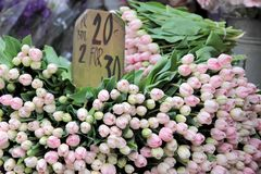 Lots of pink tulips in a flower shop Stock Images