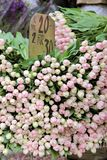 Lots of pink tulips in a flower shop Royalty Free Stock Image