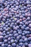Lots of plums Stock Photos