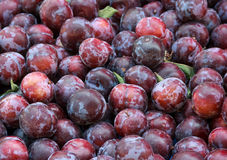 Lots of plums Stock Images