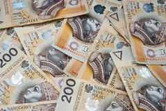 Lots of polish yellow banknotes Stock Photo