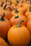 Lots of Pumpkins Stock Photo
